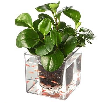 LBTrading Maceta de Flores de Doble propósito del peceras pequeño Creativa plástica Transparente con el Sistema de irrigación Inteligente: Amazon.es: Jardín