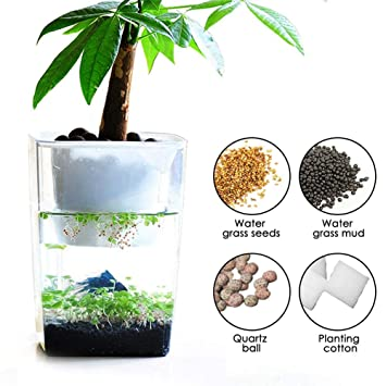 Amazon.com : Bulary Fish Vegetables Symbiotic Water Grass Desktop Mini Fish Tank Ecosystem Fish Tank Fish Vegetables Symbiotic Water Grass Mini Fish Tank ...