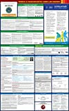 Compliance Assistance - 2018 Massachusetts State and Federal All-in-one Labor Law Poster - Laminated (English)