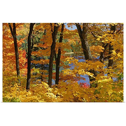 GREATBIGCANVAS Poster Print Entitled Sugar Maples, Gatineau Park, Quebec, Canada by Mike Grandmailson 18