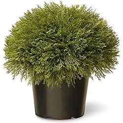 National Tree 15 Inch Juniper Bush in Green Pot (LCB4-700-15-1)