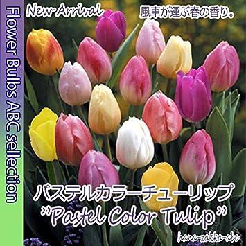 Amazon.co.jp: パステルカラー...