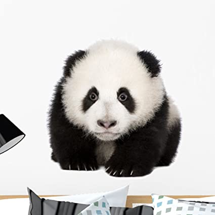 Giant Panda 18 Months Wall Decal by Wallmonkeys Peel and Stick Graphic 18 in W x