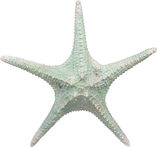 Sea Star Dark Red Starfish Wall Decor 9 Inch Resin Plaque