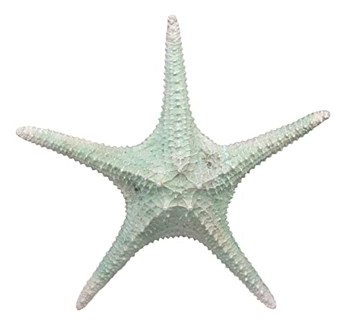 Ebros Large Jumbo Ocean Coral Sea Star Shell Starfish Statue 11.25 Long Nautical Coastal Themed Decor for Wedding Beach Party Home Decorations DIY Crafts Fish Tank Collectors