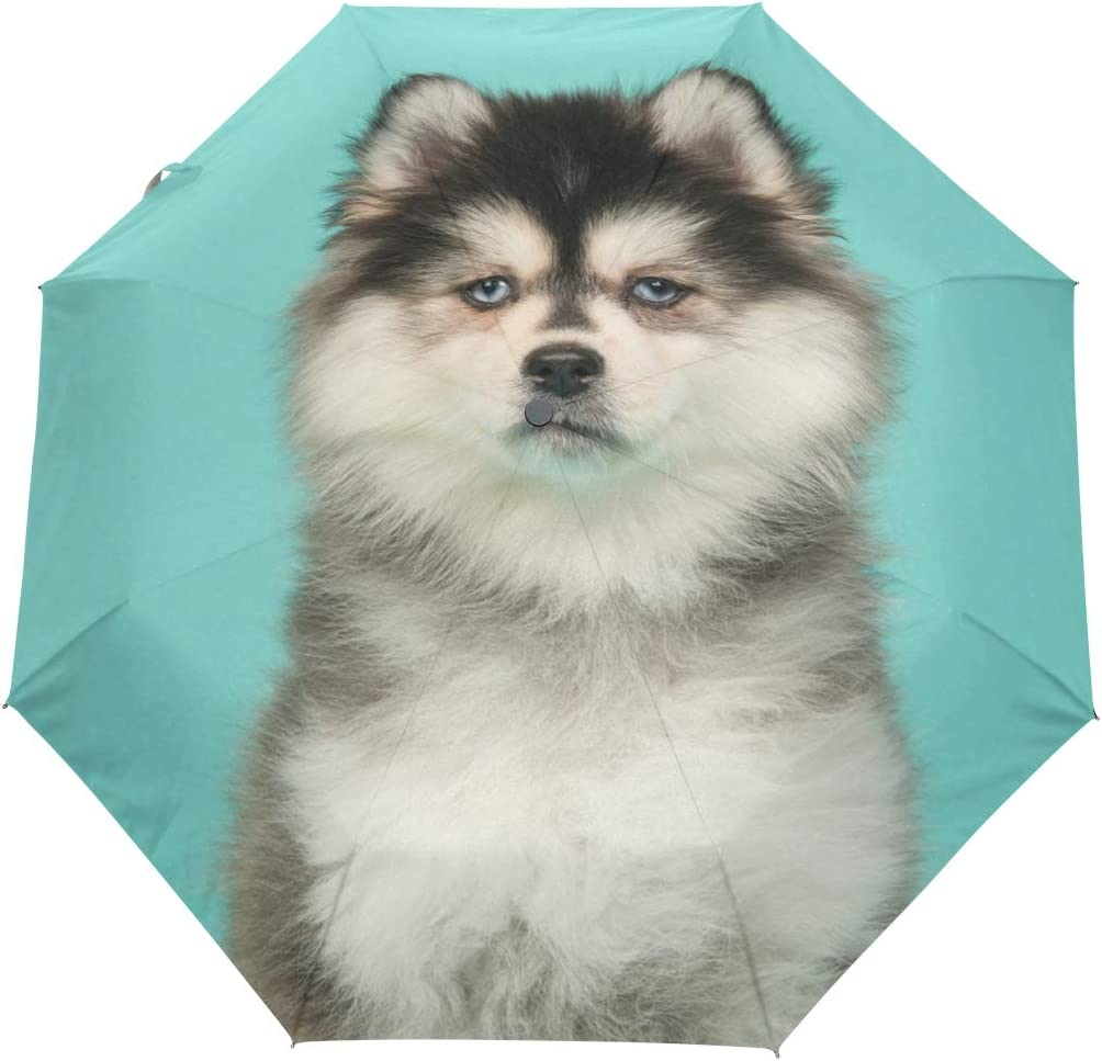 Funny Puppy Automatic Open Folding Compact Travel Umbrellas For Women