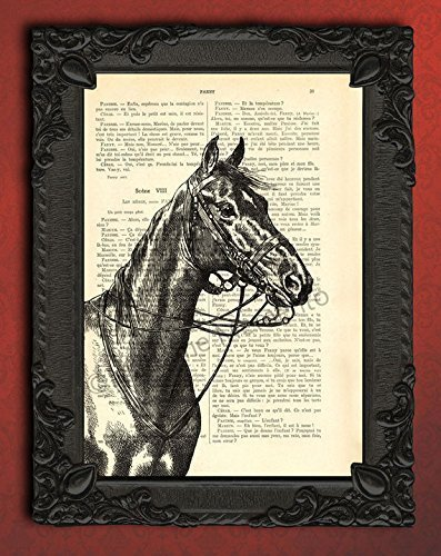 Horse head portrait in black and white wall decor, animal equestrian art print
