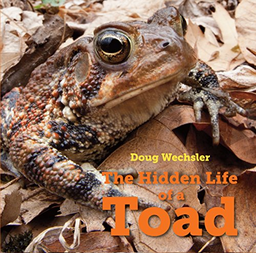 The Hidden Life of a Toad