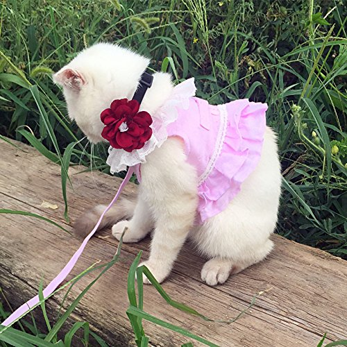 Buy what is the best cat harness