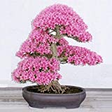 Youcoco New Nice Adorable Flower Fragrant Blooms Cherry Blossom Bonsai Seeds