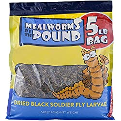 Mealworms by the Pound MBTP Bulk Dried Black Soldier Fly Larva - Treats for Chickens & Wild Birds (5 Lbs)
