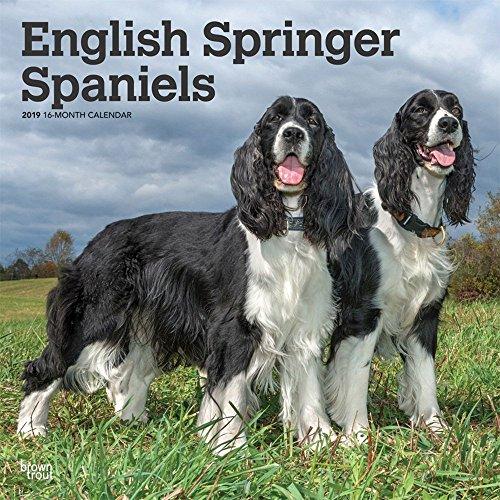 English Springer Spaniels 2019 12 x 12 Inch Square Wall Calendar, Animals Dog Breeds (Multilingual Edition)