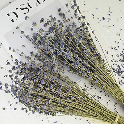 (Dried Lanvender Bundles, Total 200 Stems Freshly Real Natural Lavender Bunch for DIY Home Party Wedding Decor)