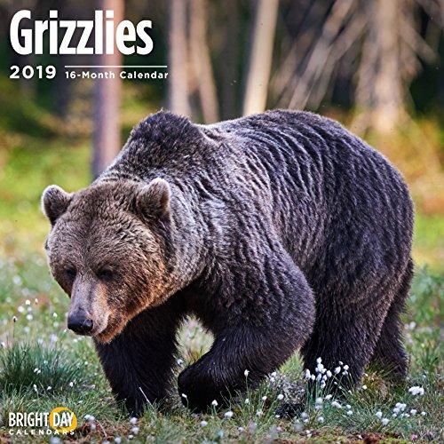 Bears Wall Calendars by Bright Day Calendars 16 Month Wall Calendar 12 x 12 Inches (Grizzles 2019) (Bear Calendar)