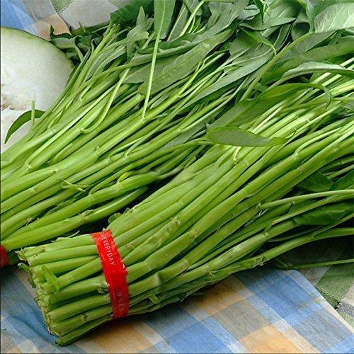 Nianyan 1000 Pcs/Bag Hot Sale Vegetable Garden Seeds Water KANG Plant Leaf Green Spinach Seeds Graden Bonsai]()