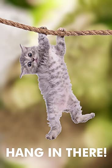 Image result for hang in there cat