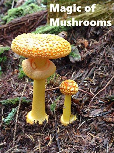 Magic of Mushrooms - Mushrooms Mixed Forest