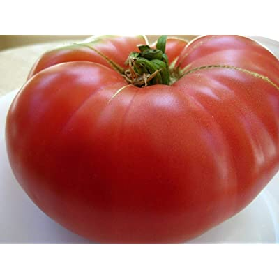 Mortgage Lifter Tomato Seeds- Heirloom- 75+ 2020 Seeds- Great Heirloom Variety : Garden & Outdoor