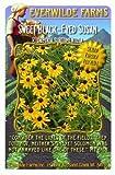 Everwilde Farms - Sweet Black-Eyed Susan Native Wildflower Seeds - Jumbo Seed Packet (2000)
