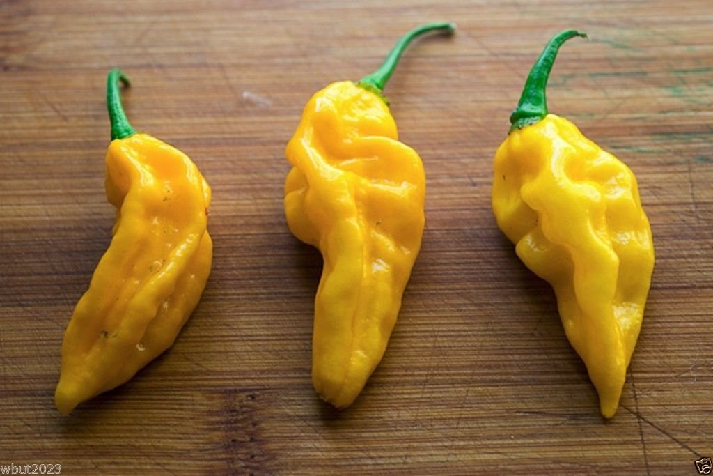 Fatalii Chili Pepper -50 Seeds - One of the Hottest Chilli - 300,000 SHU Scale