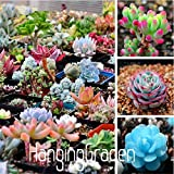 100 Rare Mix Lithops Seeds Living Stones Succulent Cactus Organic Garden Bulk Seed,#56MDPY