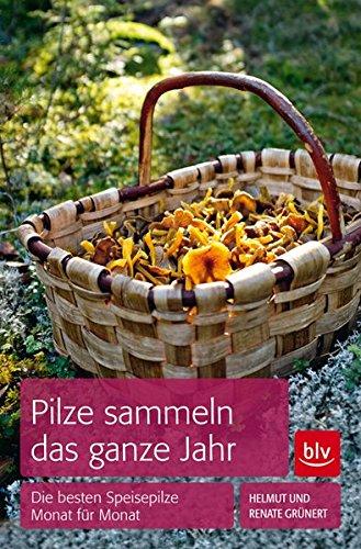 Pilze sammeln das ganze Jahr: Die besten Speisepilze Monat für Monat