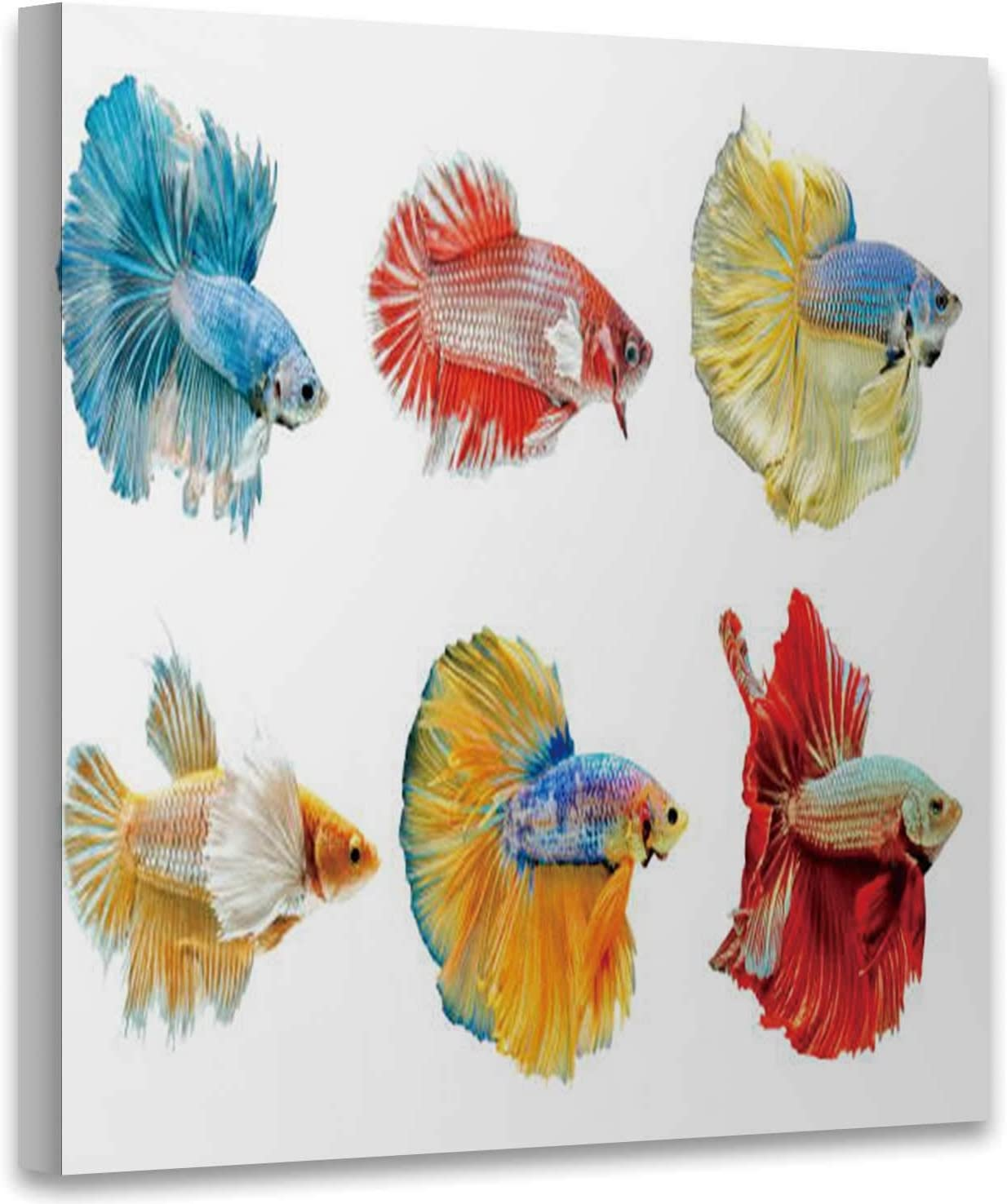 BEAUTIFUL COLOURFUL SIAMESE FIGHTING FISH BOX CANVAS PRINT WALL ART PICTURE