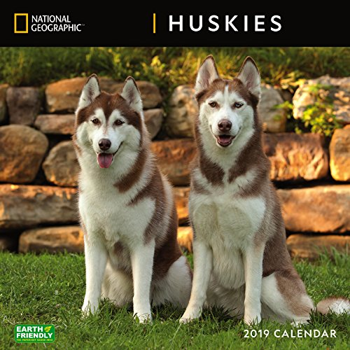 National Geographic Huskies 2019 Wall Calendar