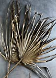 Knud Nielsen Company (KNU-) 5 per Pack - Preserved Palm Leaves in Antique Gold - 24-30'' Tall