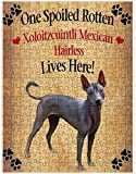 Spoiled Rotten Xoloitzcuintli Mexican Hairless Dog Puzzle with Photo Tin (252 pc.)
