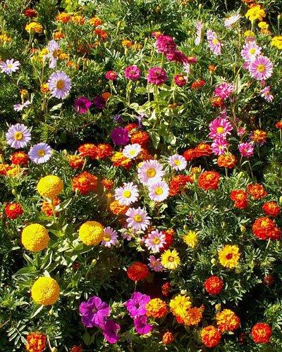 Instant Flower Garden - 1