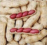New Arrival! 10 seeds / pack, Chinese 4 pcs Peanut Seeds in one Shell , Red Skin Organic Rare Heirloom Peanut, germination rate 95%