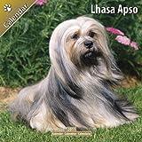 Lhasa Apso 2011 Wall Calendar #10051-11