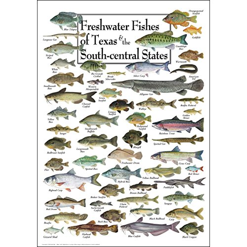 Earth Sky & Water Poster - Freshwater Fishes of Texas & South-central States