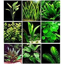 25 Live Aquarium Plants/9 Different Kinds - Amazon Swords, Anubias, Java Fern, Ludwigia and much more! Great plant sampler for 10-15 gal tanks!