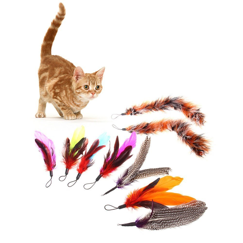 Gilroy 9pcs bird replacement feathers for cats refill for for Diy cat teaser wand