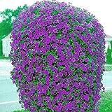Beautiful Purple Wave Petunia Seeds (30+ seeds) Comb.S/H!