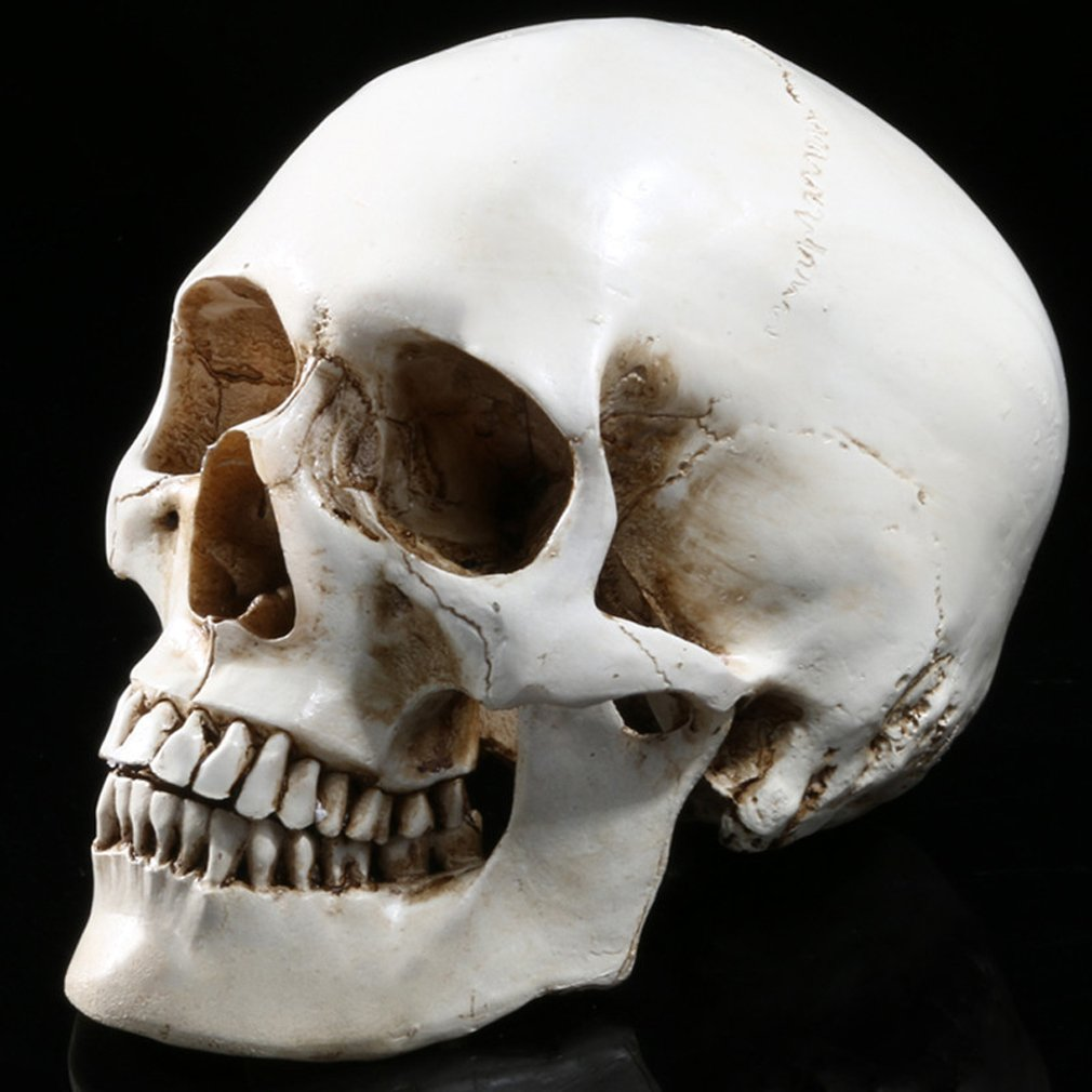 Gudessly 1 1 Life Size Model Human Skull Replica Model Anatomy White Resin Skull High Precision Teaching Tool Halloween Decor