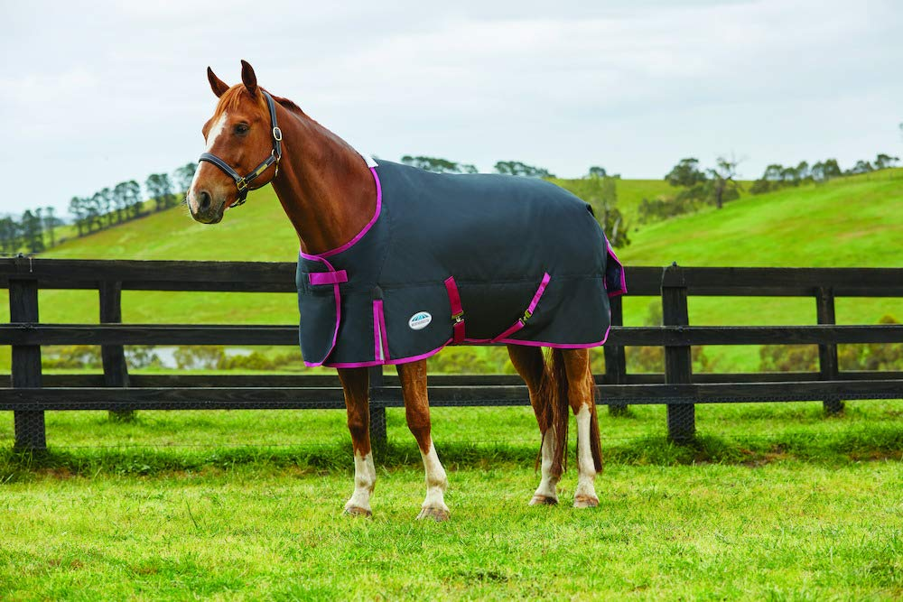 WEATHERBEETA COMFITEC Premier Free Standard Neck Medium Black Boysenberry 6'9 Horse Rug