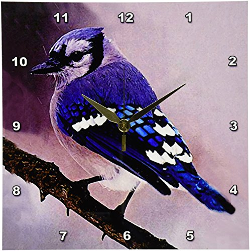 3dRose LLC Blue Jay Wall Clock, 10 by 10-Inch Blue Jays Wall Clock