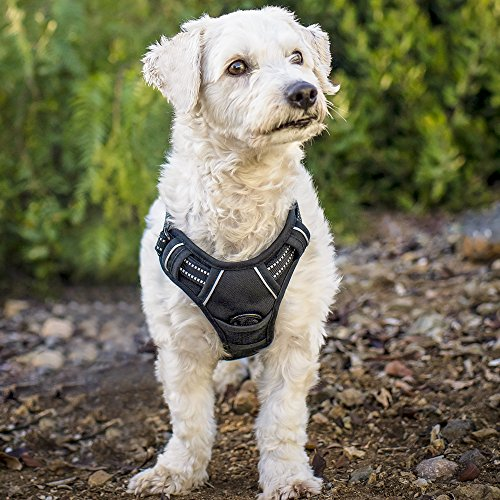 Rabbitgoo Front Range Dog Harness No-Pull Pet Harness Adjustable Outdoor Pet Vest 3M Reflective Oxford Material Vest for Dogs Easy Control for Small Medium Large Dogs (Black, S)