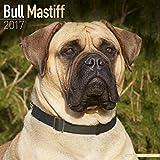 Bull Mastiff Calendar 2017 - Bullmastiff - Dog Breed Calendars - 2016 - 2017 wall calendars - 16 Month by Avonside