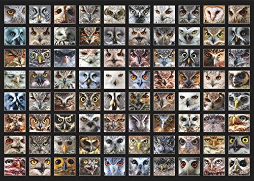 Owl Faces