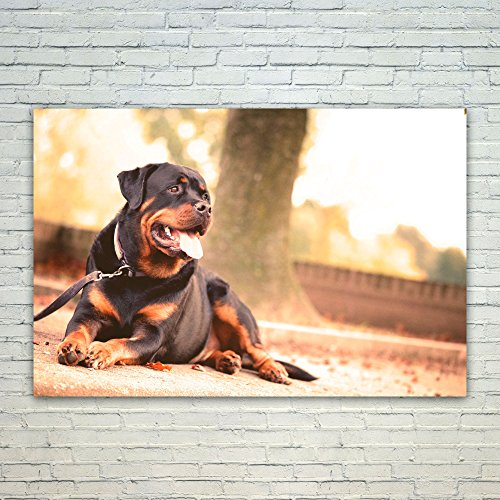 rottweiler pictures - 5