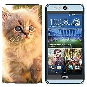 TECHCASE---Cubierta de la caja de protección para la piel dura ** HTC Desire Eye ( M910x ) ** --Gato persa azul Gatito Eyes White