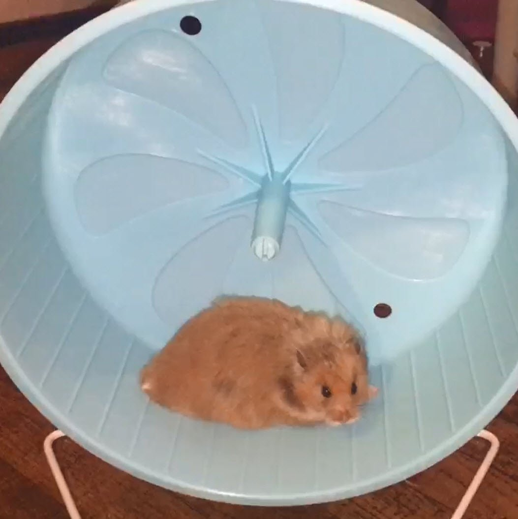 Penn-Plax 8'' Exercise Wheel - Perfect For Rats, Hamsters, Mice, Gerbils and Other Small Animals by Penn Plax (Image #3)
