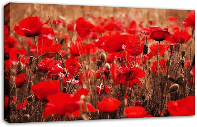 Floralstem Large Red Poppies Canvas Art Print Mounted And Ready To Hang Finished Size 34 X 20 Inches 86 X 52 Cm Amazon Co Uk Kitchen Home