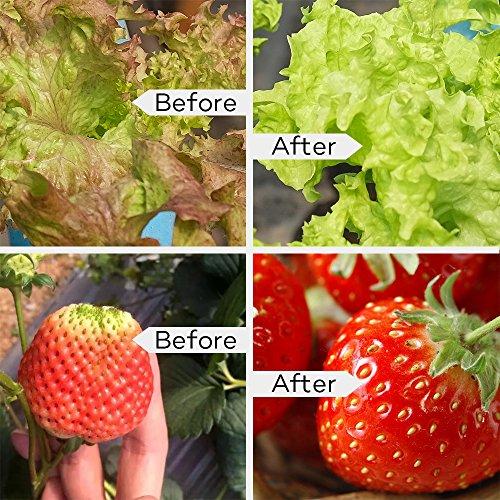61j1L87VNWL - LED Grow Light Bulb, TaoTronics Full Spectrum Grow Lights for Indoor Plants, Grow Lamp, Plant Lights for Hydroponics, Organic Soil (All Wavelengths, FREE E26 Socket)