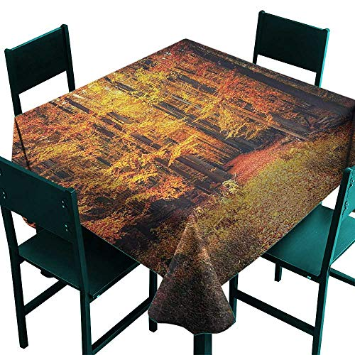 (Farm House Decor Tablecloth for Party Magical Fall Photo in National Park with Vivid Leaf Plant Eco Earth Mystical Theme Orange Brown Small Square Tablecloth W 36