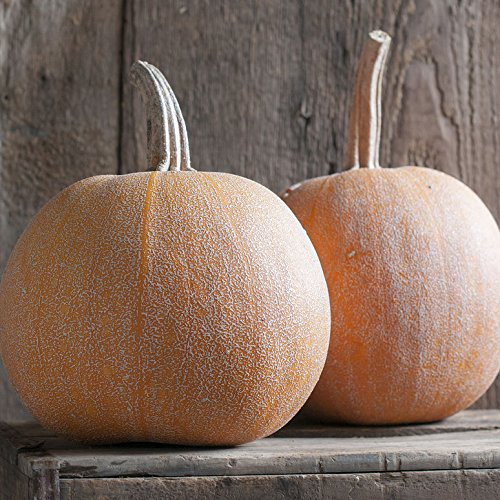 David's Garden Seeds Pumpkin Winter Luxury 9922 (Orange) 50 Non-GMO, Organic, Heirloom -